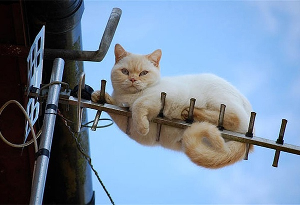 cat on an antenna